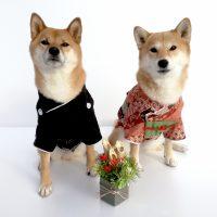 お正月とイヌ