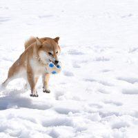 雪とわんちゃん